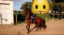 Cavalo de patrão