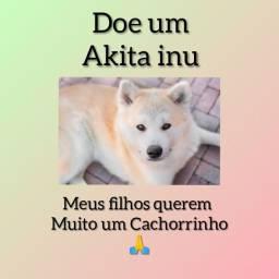 Doe um Cachorrinho