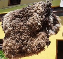 Pelego lã de ovelha nunca usado bem grande.