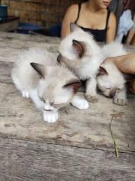 Gatinhas pra adoção