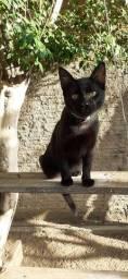 Doação: gato macho castrado 1 ano super docil