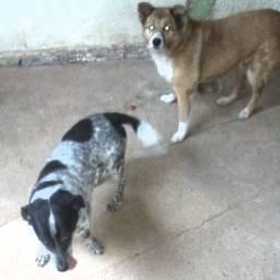 Doacao de duas dóceis cachorras