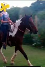 Troca-se cavalo capado.
