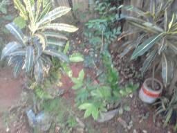 Mudas plantas em geral