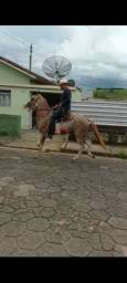Cavalo Mangalarga Paulista, Pisador