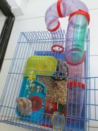 Hamster Mais Gaiola Leia a Descrição