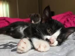 Doação de uma linda gatinha