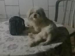 Cachorrinha desapareceu aqui no setor Santa Genoveva 2 próximo ao aeroporto de Goiânia
