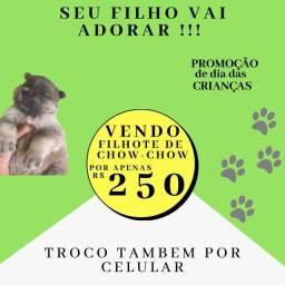 VENDO ou TROCO, FILHOTE DE CHOW-CHOW MACHO SÓ *250,00*