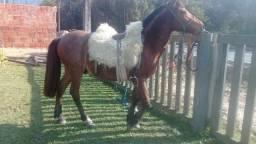 Vendo 2 cavalo