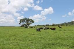 116 alqueires em pasto região de Mirassolandia - 17 km da usina