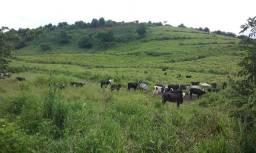 35,7 hectares terra banha da pelo rio