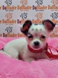 Filhotes de Chihuahua é no Da Madre Pet Shop