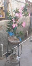 vendo essas plantas cada uma custa 80 reais