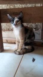 Doação desta linda gatinha