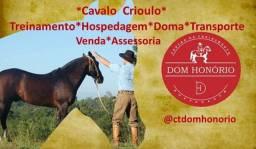Cavalo Crioulo- CT Dom Honório