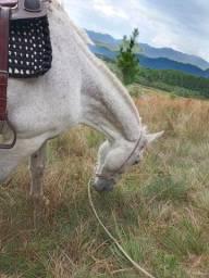 Vendo cavalo tordilho