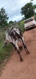 Vende se uma vaca