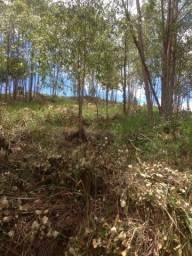 Vendo eucaliptos em pe so mandar a proposta 14 mil metros de eucaliptos