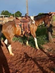 Vendo cavalo 3.500 18.981528635