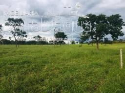 Fazenda 45 Alqueirao Pecuaria Beira Rio