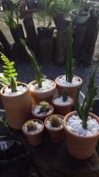 Cactos vaso de cerâmica barro planta