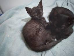 Filhotinhos de gato para adoção!