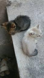 Doo 2 gatinhos abandonados