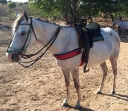 Égua só mansa de sela , meio sangue QM, sem documento com 2 anos 6 meses