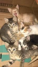 Gatinhos para adoção RESPONSÁVEL muito Lindos