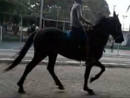 Vendo Cavalo Manga Larga Machador