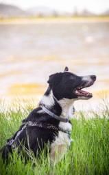Fotografia pet para canis, tutores e empresas