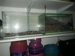 3 aquários