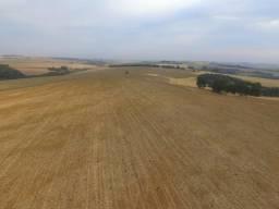 Fazenda em Nova Aurora -Paraná ( Lavoura )
