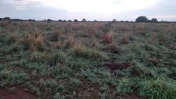 Fazenda 455 Alqueires na bacia do Araguaia