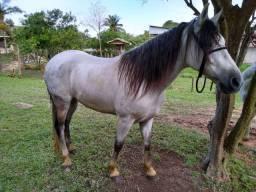 Vendo ou troco cavalo manga larga