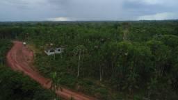 Terreno em Benevides com 100 Hectares e 100 mil pés de Açai