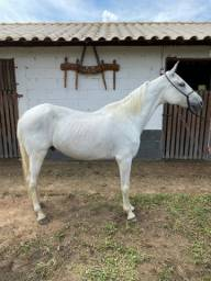 Cavalo MM à venda