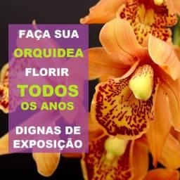 Curso de Orquídeas Como Cultivar