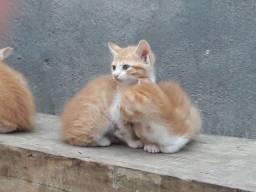 Lindos gatinhos ? para adoção!
