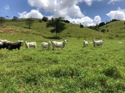 Fazenda 850 hectares , a 30 minutos de Maceió