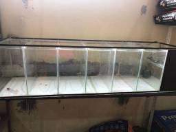 Bateria aquario