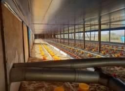 Vende-se granja de frango (aviário)