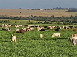 Título do anúncio: CM Oportunidade Imóvel Rural