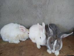 Promoção do ano 11 coelhos