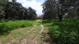 Fazenda em Amontada 102 hectares cajueiros,margem rio,35 km de Icaraizinho oportunidade