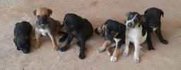 Doa-se filhotes de cachorros