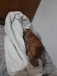 Cachorrinhos pinther.n1