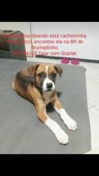 Doação cadelinha urgente