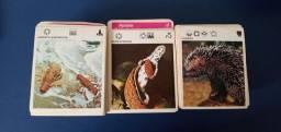 687 Cartões da Coleção Mil Bichos